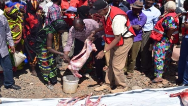 Marsabit residents risk losing 90pc of their animals to drought